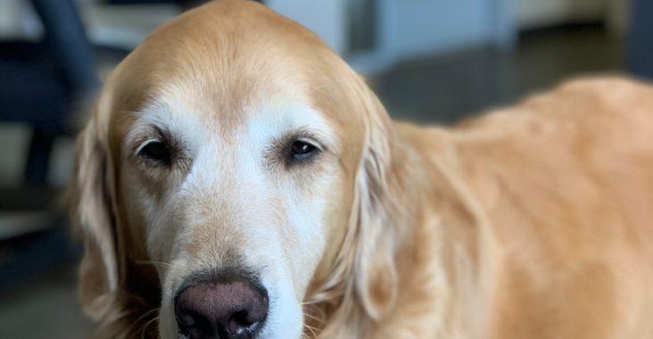 Tryg og værdig behandling af dit kæledyr på en fast dyreklinik